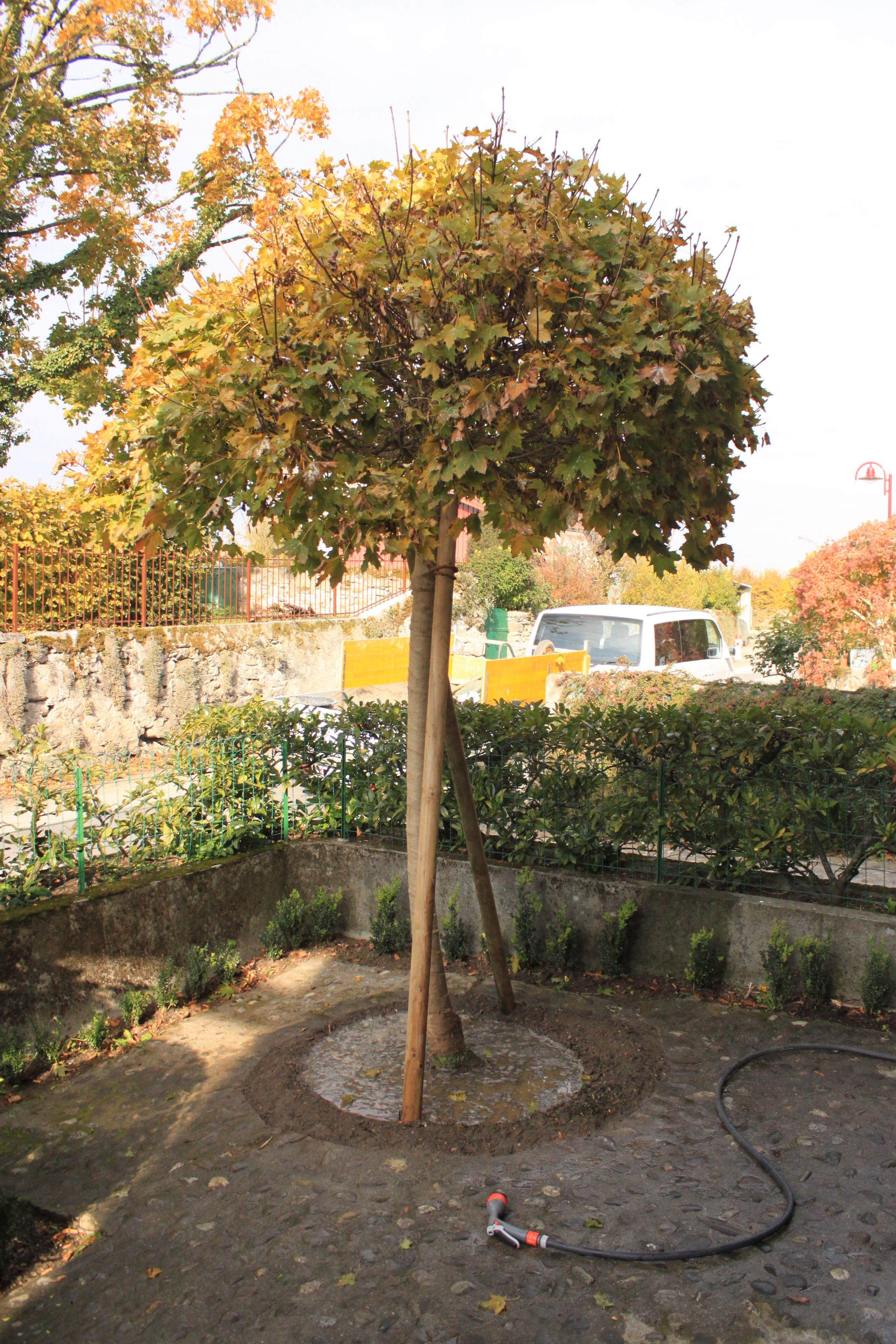 Plantation gibaud jardin for Jardin plantation
